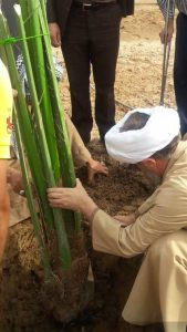 کاشت نهال توسط امام جمعه کارون به مناسبت روز درخت کاری