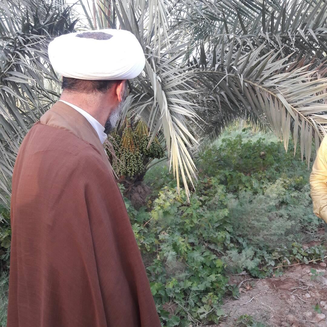 گزارش تصویری/بازدید امام جمعه کارون از باغات و نخیلات این شهرستان
