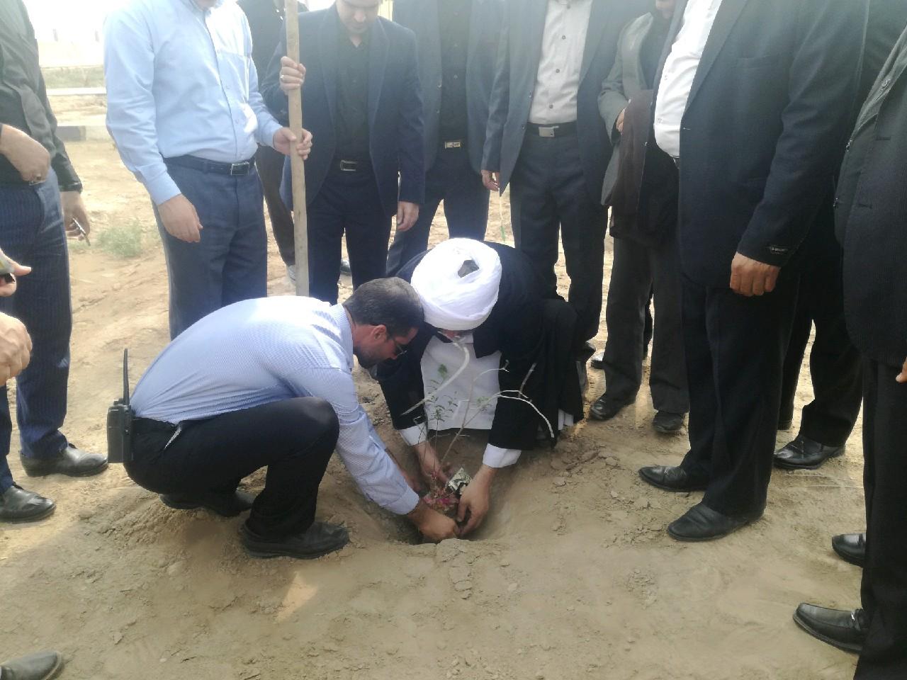 گزارش تصویری/نهال کاری محوطه مصلا
